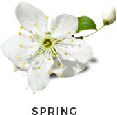 selector-spring
