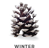 selector-winter